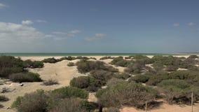 Panlandschap Shell Beach in het Nationale Park van de Haaibaai, Westelijk Australië stock footage