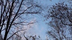 Panmening van donkere boomsilhouetten tegen de lichtblauwe hemel stock video