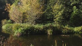 Panna av denRay tända skogen till den lilla strömmen arkivfilmer