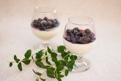 Milk dessert with blueberry jam and fresh berries royalty free stock images