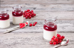 Panna cotta with fresh red currants. Panna cotta in glass flasks and red currant sorbet Stock Photography