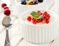 Panna cotta with red currant Stock Photography