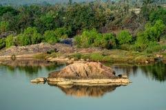 Panna flod och rivebed på Panna National Park, Madhya Pradesh, Royaltyfria Foton