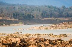 Panna flod och rivebed på Panna National Park, Madhya Pradesh, Indien Arkivfoton