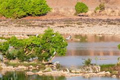 Panna flod och rivebed på Panna National Park, Madhya Pradesh, Indien Royaltyfria Bilder