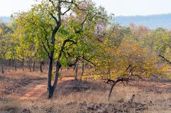Panna flod och rivebed på Panna National Park, Madhya Pradesh, Indien Royaltyfria Foton
