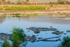 Panna flod och rivebed på Panna National Park, Madhya Pradesh, Indien Arkivbild