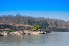 Panna flod och rivebed på Panna National Park, Madhya Pradesh, Indien Royaltyfri Fotografi