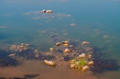 Panna flod och rivebed på Panna National Park, Madhya Pradesh, Indien Fotografering för Bildbyråer