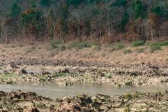 Panna flod och rivebed på Panna National Park, Madhya Pradesh, Indien Arkivbilder
