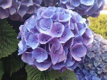 Panna młoda kwiat Zdjęcie Royalty Free