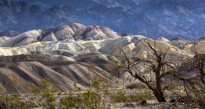 Pannaliten vik Death Valley Arkivfoton