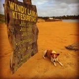 Panneau d'affichage de chien à environ Photographie stock