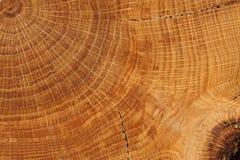Panneau de chêne avec haut étroit d'anneaux de croissance Photographie stock