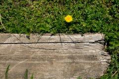 Panneau de fleur et en bois Images stock