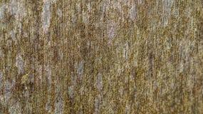 Panneau en bois (JPG+EPS) Image libre de droits
