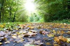 Panneau routier avec des feuilles d'automne sur la rue à l'arrière-plan photo stock