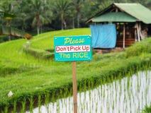 Panneau routier : Ne tirez pas les pousses de riz ! images libres de droits