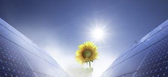 Panneau solaire et crocus Photos libres de droits