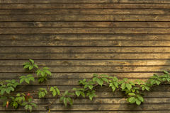 Panneaux de fond et vintage de lierre Photo libre de droits