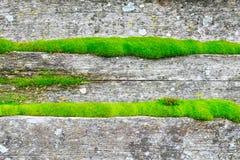 Panneaux en bois d'arbre couverts de la mousse verte Images stock