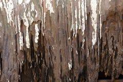 Panneaux sales de porte de Muddy Neglected Rotten Vintage Wooden photos stock