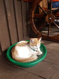 Panned a cat. Cat panning with luck Royalty Free Stock Photo