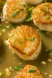 Panned Seared Scallops in Broth. Ready to Eat royalty free stock photos