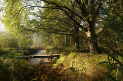 Pannehoef. A little pedestrian bridge in the Pannehoef Forrest at an early autumn morning Stock Photos