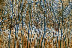 Pannello di legno di pino con gli alberi Fotografia Stock