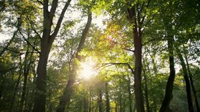 Panning Shot of Sun Shining with Flare through the Trees in Forest in Autumn. Panning Background Nature Video Shot of Sun Shining through the Trees in the Forest stock footage