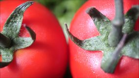 Panning close up on two red fresh organic tomatoes on green background. Vegetables from backyard garden for salad in summer stock video footage