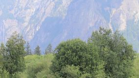 Panning from forest base to mountain tops in Snoqualmie Washington. Tall grass in forground with forest and dramatic mountains behind in Snoqualmie in Washington stock footage