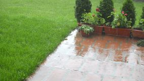 Panning in garden on rain. Camera panning to the right in a garden on a rainy day stock video