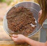 Panning for gold 1 Royalty Free Stock Photo