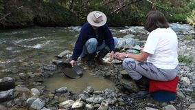 Panning for gold at spruce creek stock footage