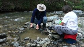Panning for gold in the yukon territories stock video