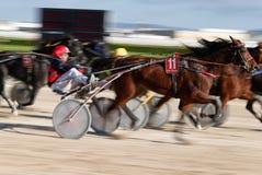 Horse harness racing in palma de mallorca hippodrome panning stock images