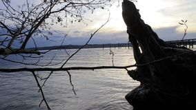 Pan tree to pier sunset. Panning left to right from tree over driftwood to pier at sunset stock video footage