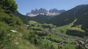 Panning mening van Sass Ciampac Ciampatsch met een voorgrond van europaeus van Trollius van globeflowerwildflowers in het Dolomie stock footage