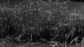 Panning moeras van rechts naar links stock video