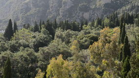 Panning mountains, cypress and olive trees stock video