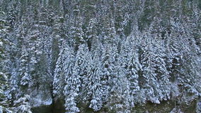 Panning Movie of Snow Covered Evergreen Trees along Hiking Trails on Mountain in Beautiful  Oregon 10880p stock footage