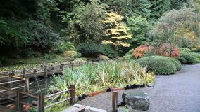 Panning Movie of Wooden Walkway Bridge over Koi Fish Pond with Deciduous Trees and Evergreen in Portland Japanese Garden in Autumn stock video