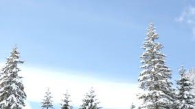 Panning od lewicy wyprostowywać na pięknym zima krajobrazie zbiory