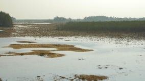 Panning over moerasland op een rustige de Lentedag in de wildernis stock footage