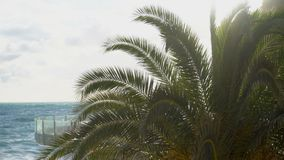 Panning through palm leaves. Against the blue sky stock footage