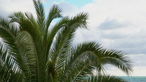Panning through palm leaves. Against the blue sky stock video footage