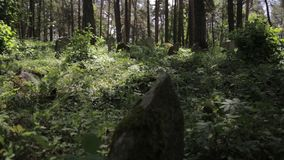 Panning shot of abandoned islamic graveyard in the forest. Grass and trees grows over grave monuments in the woods