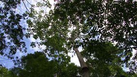 Panning the canopy of the Amazon rain forest stock footage